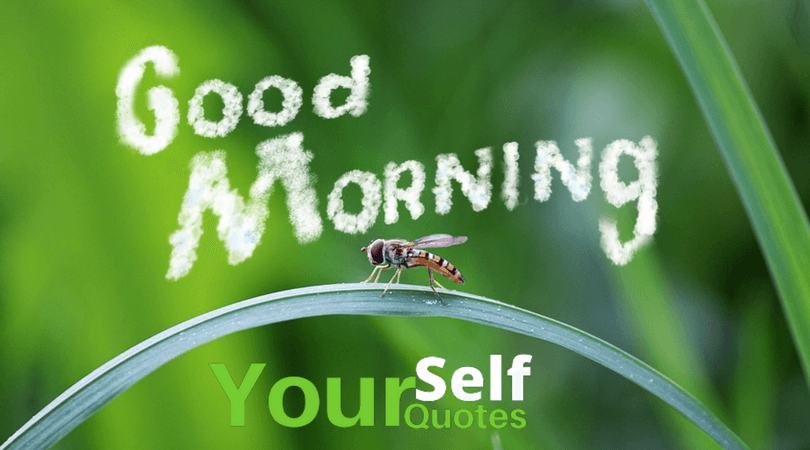 Morning Motivation Quotes.png