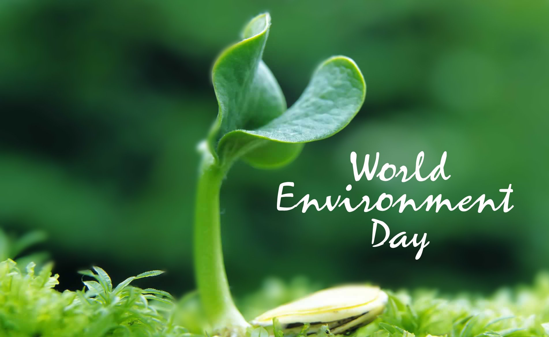world environment day images.jpg