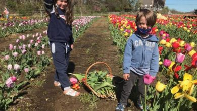 kids in tulips.jpg